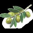 Wooden Spoon Bio ajakbalzsam - Olíva csók (4,3 ml)